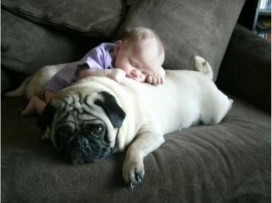 kid & animal