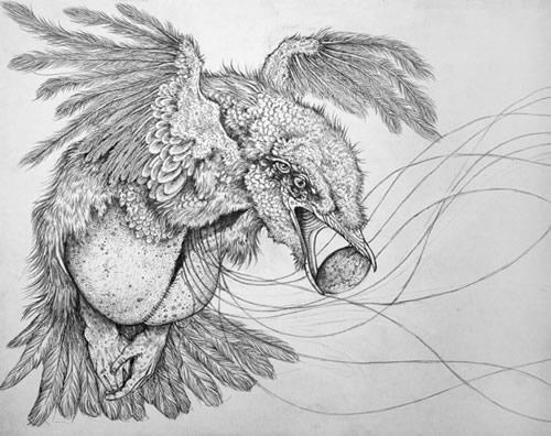 Man VS. Animals---Caitlin Hackett