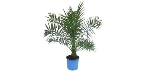 palms-parlor