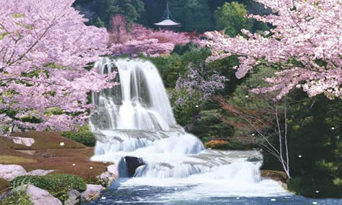sagura_japan_cherry_blossom_moving_waterfall